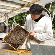Miel des Coteaux de Bourg